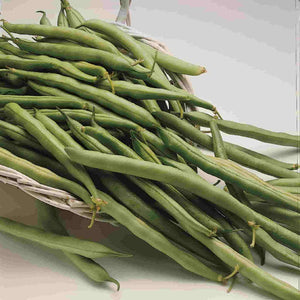 A multitude of Bean Contender (Bush) Vegetables from McKenzie Seeds