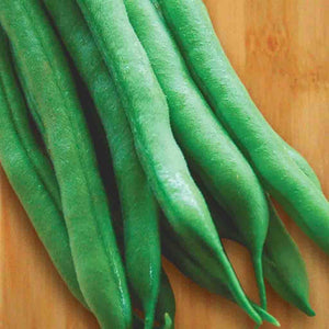 A few Green Bean Provider (Bush) Organic Vegetables from McKenzie Seeds