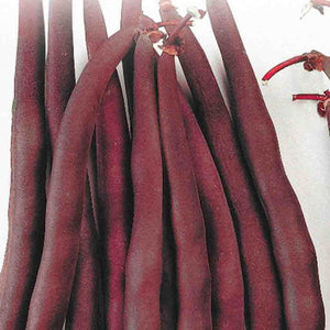 Multiple Red Bean Royal Burgundy (Bush) Vegetables from McKenzie Seeds