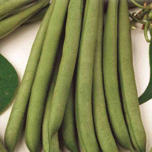 A Selection of Green Bean Stringless Green Pod (Bush) Vegetables from McKenzie Seeds
