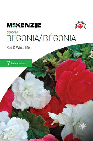 Begonia Red & White Mix