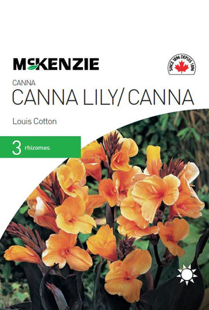 Canna Lily Louis Cotton