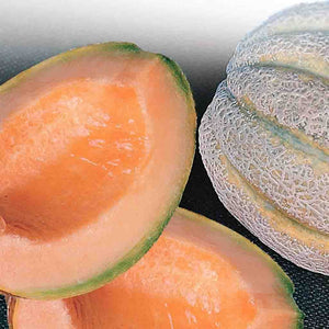 Grow an absolutely appetizing Cantaloupe Delicious with McKenzie Seeds