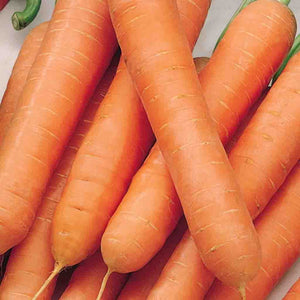 A ripe orange bundle of McKenzie Seeds Carrot Nantes Touchon Organic Vegetables.