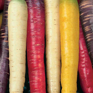 A beautiful mix of colors with McKenzie Seeds Carrot Rainbow Mix (Sow Easy) Vegetables