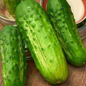 Sow Easy Cucumber Boston Pickling
