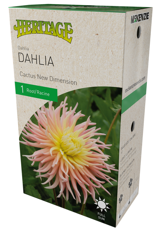 Dahlia Cactus New Dimension