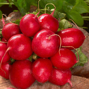 Radish Cherry Belle - Bulk Pack