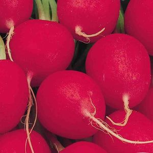 Radish Crimson Giant (Sow Easy)