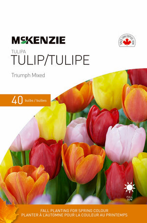 Tulip Triumph Mixed