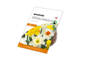 Narcissus Daffodil Large Cup Mix