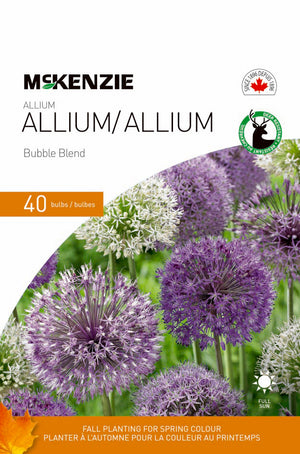Allium Bubble Blend