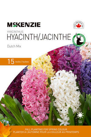 Hyacinth Dutch Mix