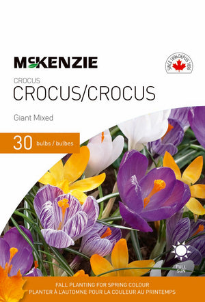 Crocus Giant Mixed