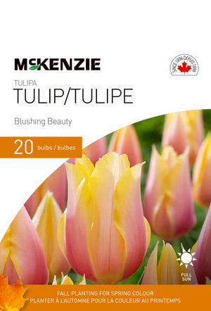 Tulip Blushing Beauty