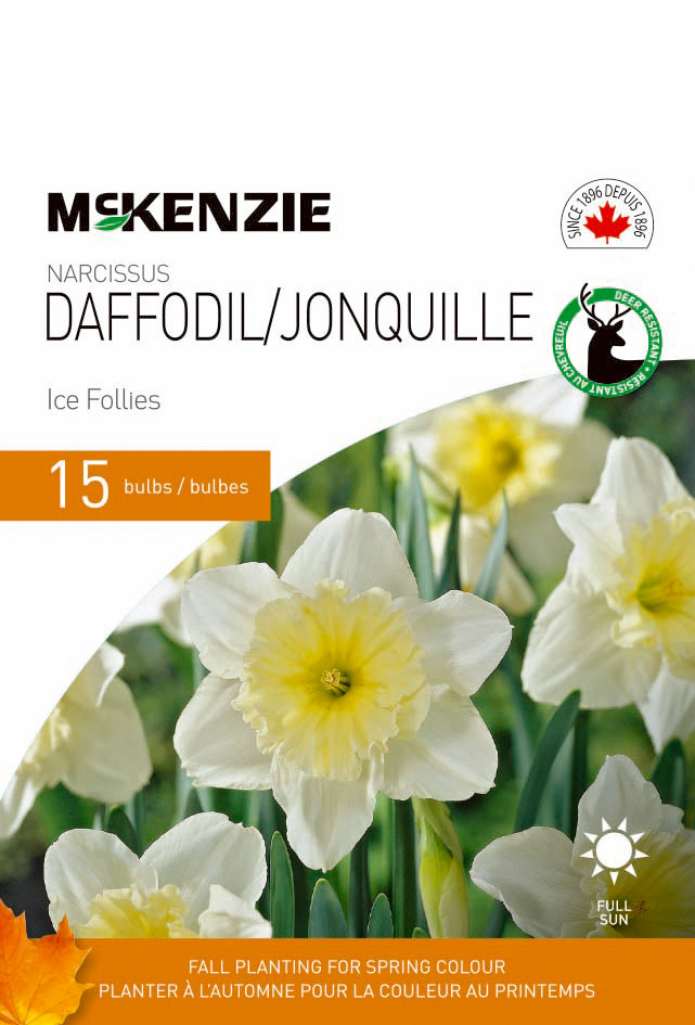 Narcissus Daffodil Ice Follies