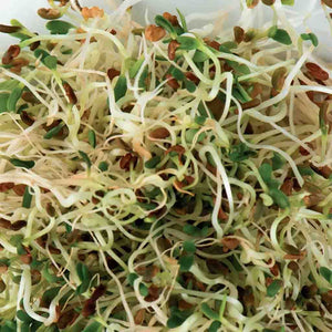 Green and White Alfalfa Sprouts from McKenzie Seeds