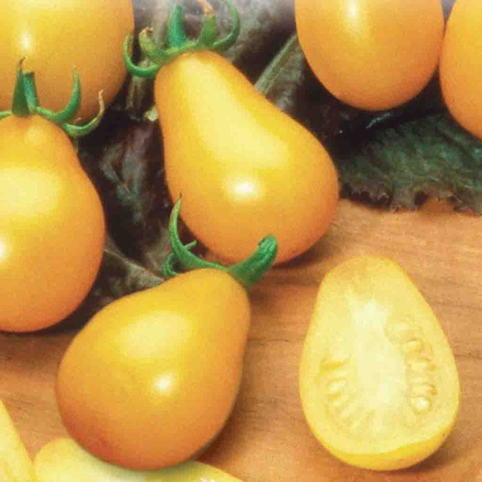 Tomato Yellow Pearshaped Organic