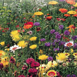 Wildflower All Purpose Mix (Jumbo Pack)