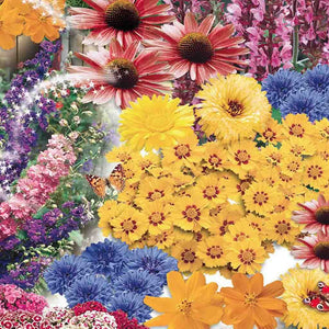Wildflower Butterfly Garden (Jumbo Pack)