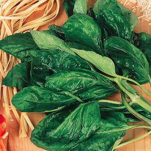 An herb that would go good with any dish would be the Basil A Foglia Di Lattuga from McKenzie Seeds