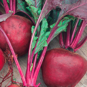 A glowing red bunch of McKenzie Seeds Beet Green Top Bunching Organic Vegetables
