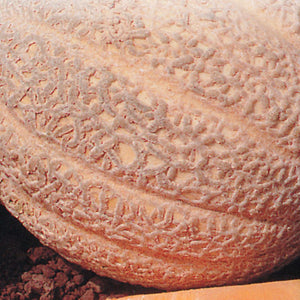 An appetizing Cantaloupe Hale's Best Jumbo Vegetable with McKenzie Seeds