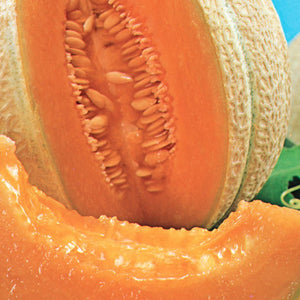 A beautiful ripe Cantaloupe Hearts of Gold Organic Vegetable from McKenzie Seeds