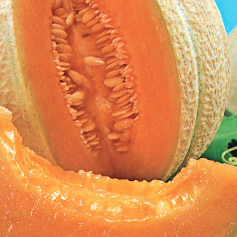 Cantaloupe Hearts Of Gold Organic Mckenzie Seeds If you don't think about. mckenzie seeds