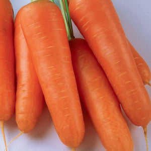 Small Bright Orange from McKenzie Seeds Carrot Shin Kuroda Vegetables