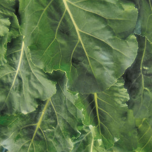 Collards Georgia Southern (Sow Easy)