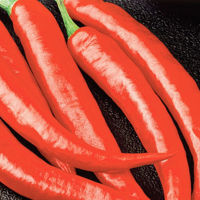 Pepper Long Red Cayenne Slim Organic