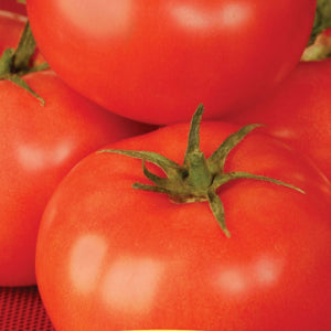 Tomato Better Boy Hybrid (Sow Easy)