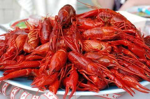 10 Pounds Live Crawfish