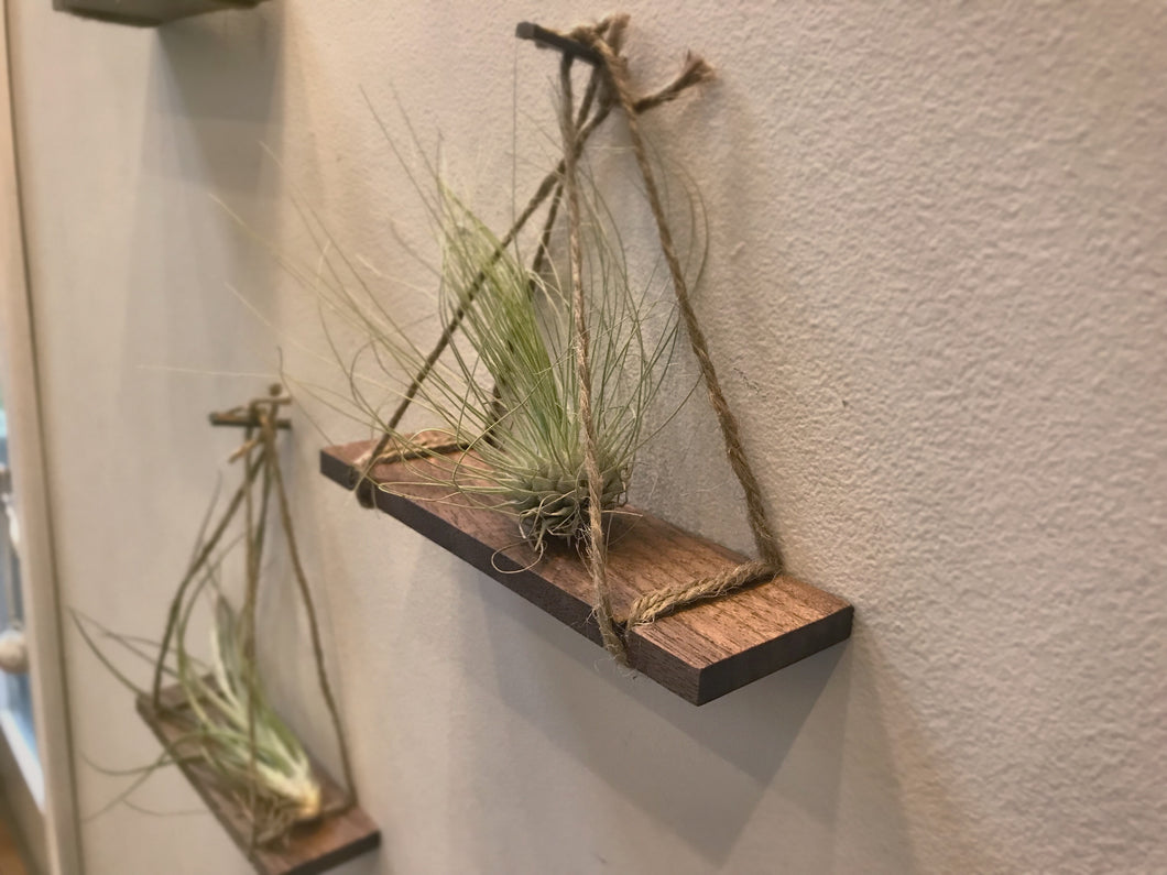 Air Plant Hangers (Set of 3)