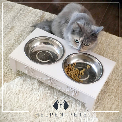 Helpen Pet Feeder and Tortie Cat
