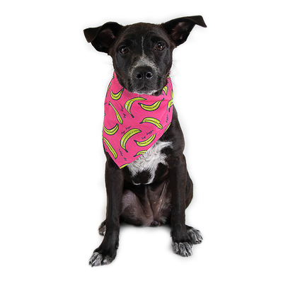 Toy Doggie™ - Tostones Con Mayoketchup Dog Bandana