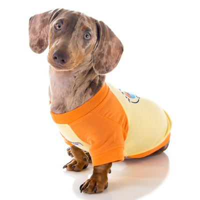 Toy Doggie™ - Bark Society Brunch Club | Gender Neutral Dog Raglan