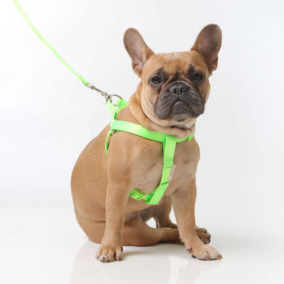 Toy Doggie™ - Fluorescent Green Nylon Dog Harness