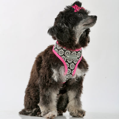 Toy Doggie™ - Flower Puff Step-In Dog Mesh Harness