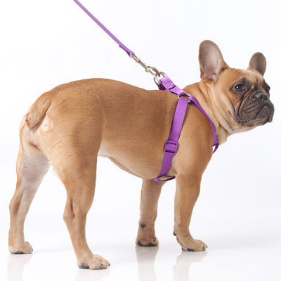Toy Doggie™ - Vibrant Purple Nylon Dog Harness