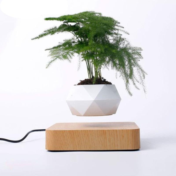 Anti-Gravity Zen Pot