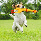 Pets Noisemaker Chicken Toy