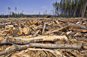 Deforestation and unsustainable development