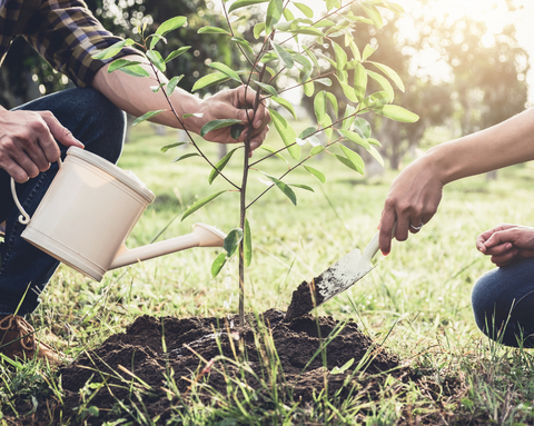 Tree planting, reforestation, environment, earth day, green beauty blog, wellbeing,
