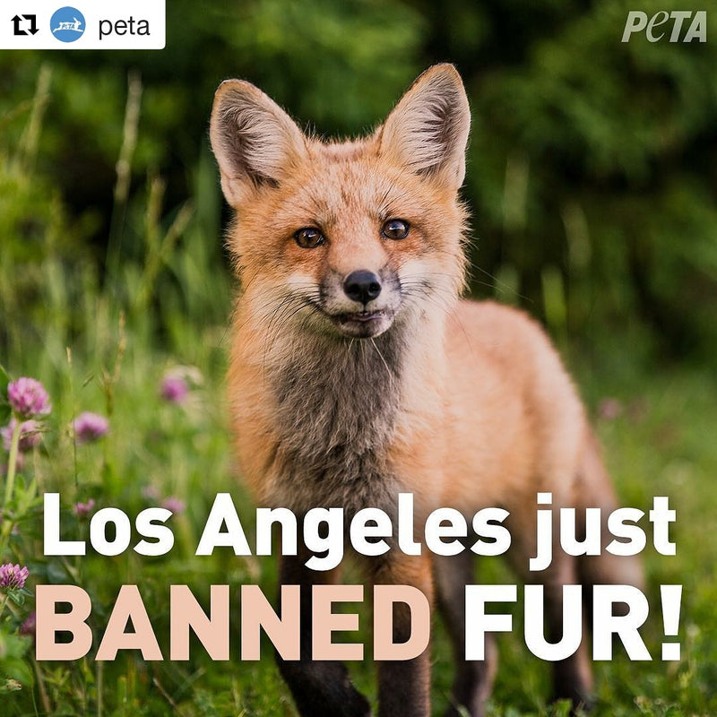 Los Angeles Bans REAL Fur