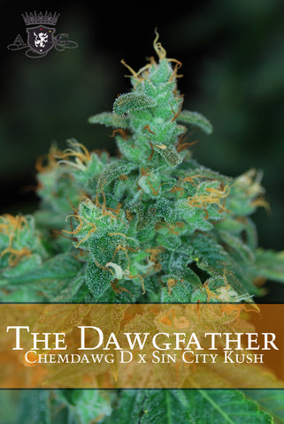 The Dawgfather