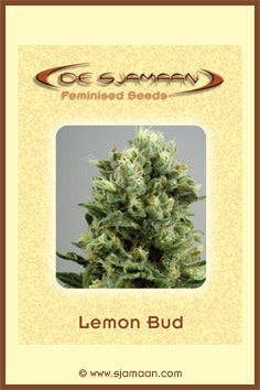 Lemon Bud
