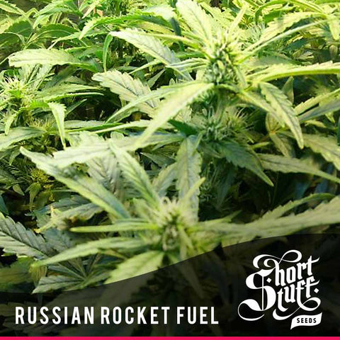 Russian Rocket Fuel