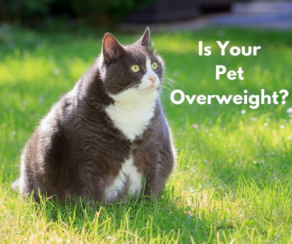 Is Your Pet Obese? Help Us End Pet Obesity.
